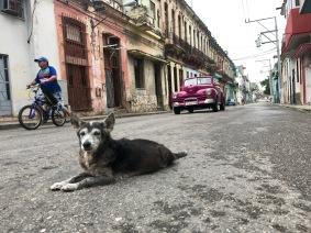 Street dogs.